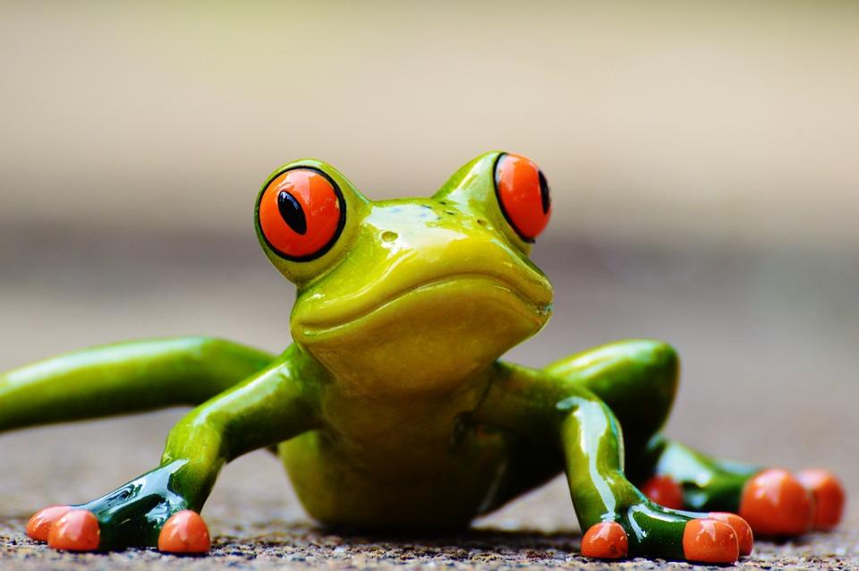 frog-927765_960_720
